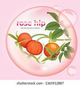 Rose hip oil extract essence with flower and fruit on background template. Vector set of element for advertising, banner, packaging design of rosehip products.