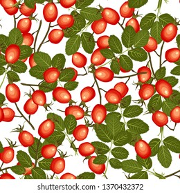 Rose hips seamless pattern on white background. Dog-rose ripe red fruits. Vector illustration