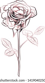 rose illustration sketch isolated flower
