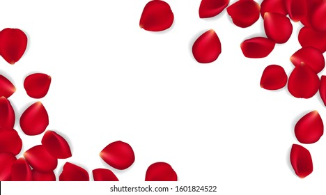 Rose petals on white ground. Vector illustration red rose petals background. Can be used Valentines day, mothers day and different holidays