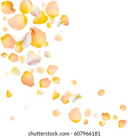 Rose petals vector background. Eps 10 illustration. Yellow rose petals scattered on white background. Frame made of petals.