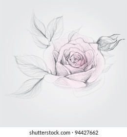ROSE / Realistic Vector Sketch of flower (not auto-traced)