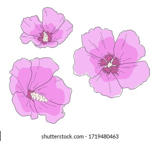 Rose of Sharon, Hibiscus syriacus. Hand drawn sketch flower set. Vector line art illustration isolated on white background. Minimalist contour drawing. Template for the design, banner or print.