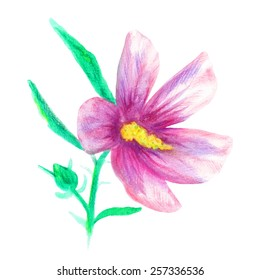 Rose of Sharon isolated on white background. Korean national flower. Hand drawn with watercolor pencils. Pink, green and yellow colors. Vector illustration for your design.
