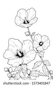 Rose of Sharon. Mugunghwa, the national flower of South Korea.