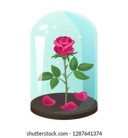 Rose under flask, glass dome. Beautiful single flower on white background