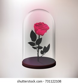 Rose under the glass vector