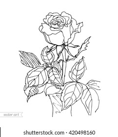 rose vase isolated pot vector 260nw