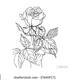 rose vase isolated vector sketch 260nw