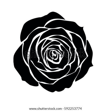 Rose Vector Stock Vector Royalty Free 592253774 Shutterstock