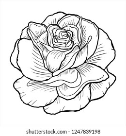 rose vector, flower sketch, line drawing