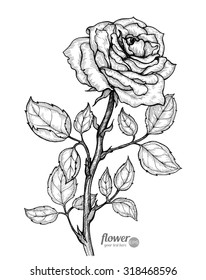 Rose. Vector. Hand drawn artwork. Love bohemia concept for wedding invitations, cards, tickets, congratulations, branding, boutique logo, label. Gift for young girl and women. Black and white