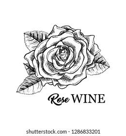 Rose Wine flower hand drawn vector illustration. Floral ink pen clipart. Black and white realistic rosebud outline drawing. Rose wine sketch with lettering. Logo, emblem, label isolated design element