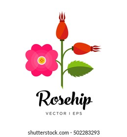 Rosehip branch, dog rose berry, flower, leaf and steam, vector editable illustration. Dog-rose flower in flat simple style.