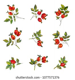 Rosehip set  with berries and leaves.Handrawn sketchy design, vector graphic illustration