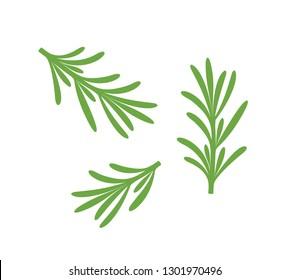 Rosemary branch. Isolated rosemary on white background. EPS 10. Vector illustration