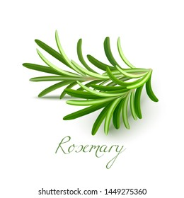 Rosemary Branch. Rosemary Realistic Elements for Labels of Cosmetic Skin Care Food Product Design. Vector Isolated Illustration
