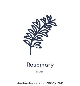 rosemary icon from nature outline collection. Thin line rosemary icon isolated on white background.