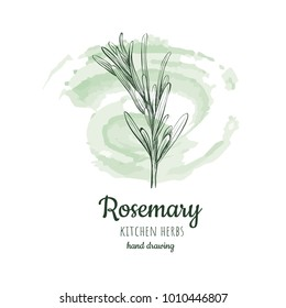 rosemary sketch style vector illustration for your design eps skech rosemary