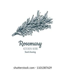 rosemary sketch style vector illustration for your design eps skech rosemary