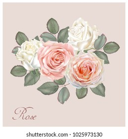 Roses bouquet white and pink color ,vector illustration
