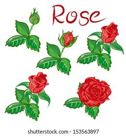 Roses, flower set, stages of flowering
