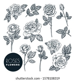 Roses flowers set, vector sketch illustration. Hand drawn floral nature design elements. Rose blossom, leaves and buds isolated on white background.