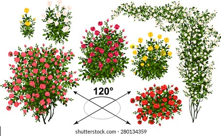 Roses. Isometric trees in vector