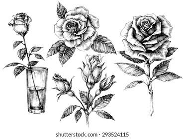 Roses set, floral design elements collection