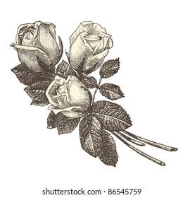 """Roses - vintage engraved illustration - """"La mode illustrée"""" by Firmin-Didot et Cie in 1882 France"""
