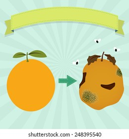 Rotten orange. Rotten orange with flies and new orange. Blank ribbon for insert text.
