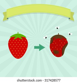 Rotten strawberry with flies and new strawberry. Blank ribbon for insert text.