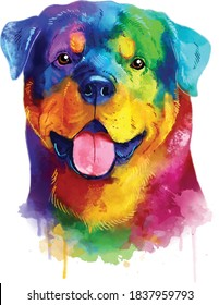 Rottweiler colorful dog portrait. Watercolor hand drawn illustration converted into vector.