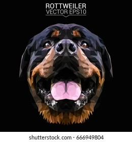 Rottweiler dog animal low poly design.Vector illustration.