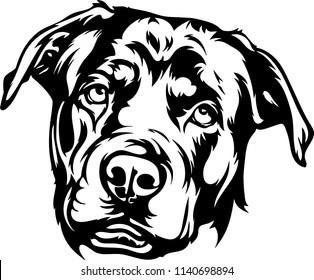 Rottweiler dog breed pet