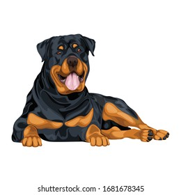 Rottweiler Dog In Sitting Pose Vector Illustration Isolated On White Background