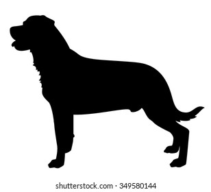 Rottweiler Dog standing in side view silhouette isolated