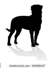 Rottweiler Dog standing silhouette isolated with shadow