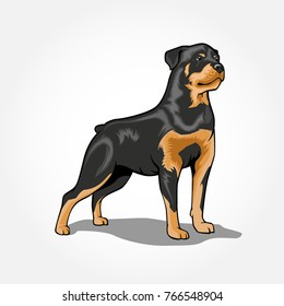 Rottweiler Dog standing vector illustration isolated with shadow
