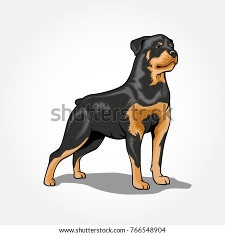 Rottweiler Dog Standing Vector Illustration Isolated Vector de stock ...