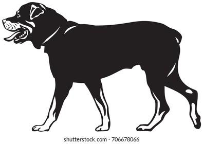 Rottweiler dog walk vector illustration from the dog show sign symbol set