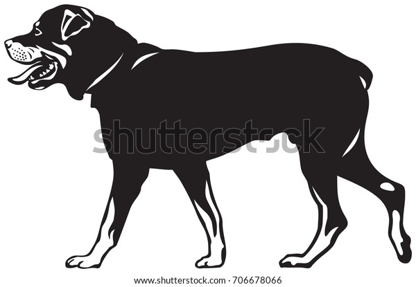 rottweiler dog walk vector illustration dog stock vector royalty free 706678066 https www shutterstock com image vector rottweiler dog walk vector illustration show 706678066