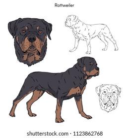 Rottweiler illustration, dog breeds