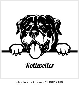 Rottweiler - Peeking Dogs - breed face head isolated on white - vector stock