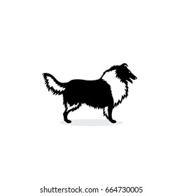 Rough Collie dog - vector illustration