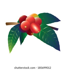 Rough currant or coffee berry (Coprosma hirtella) vector
