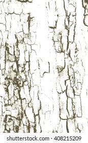 Rough tree bark wood grunge background  texture pattern