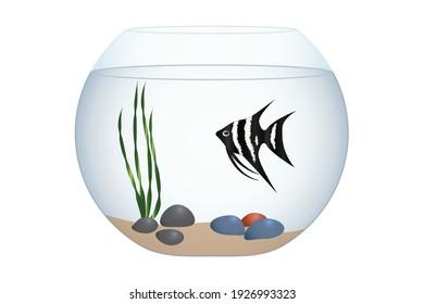 Round aquarium or fishbowl and exotic fish isolated on white, vector illustration