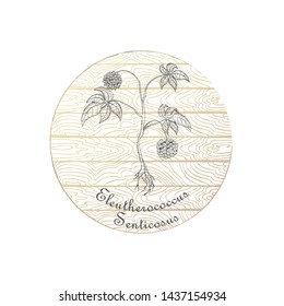 Round Badge with Contour Siberian Ginseng and Plank Wooden Background. Eleutherococcus Senticosus Plant Name Bent by the Badge Shape. Label for Traditional Herbal Medicine, Cosmetology, Food Industry.