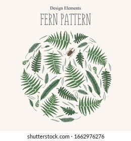 Round floral decorative design element with fern, pine needles and stag-beetle. Forest ferns on light background. Vector illustration